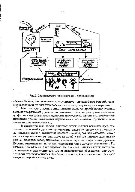 Схема простой пищевой цепи