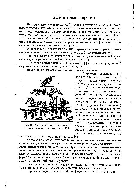 Упрощенная схема пирамиды численности (по Г А Новикову, 1979) .