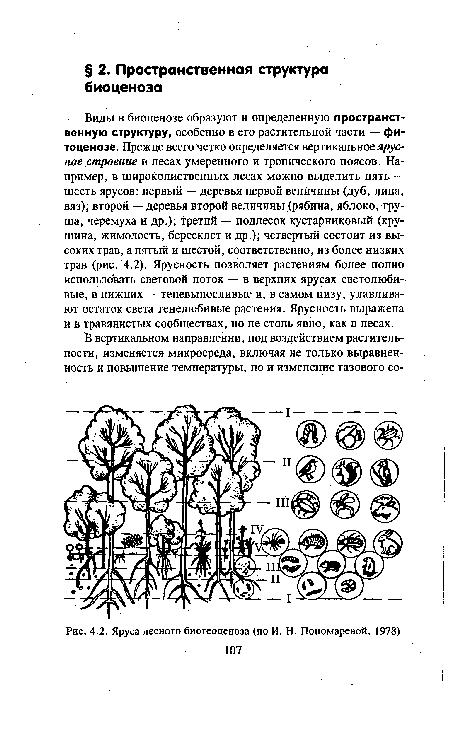 Виды в биоценозе образуют и определенную пространственную структуру, особенно в его растительной части - фитоценозе.