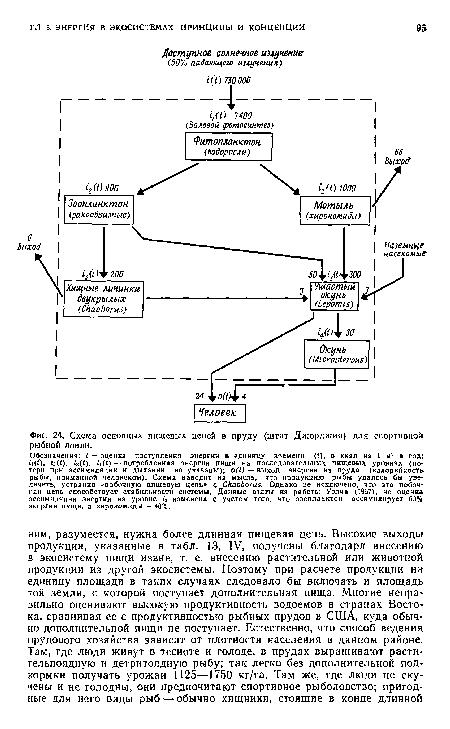 Схема основных пищевых цепей в