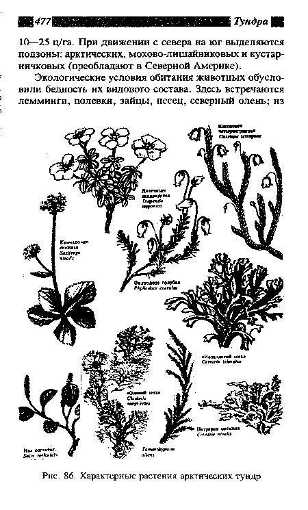 Характерные растения