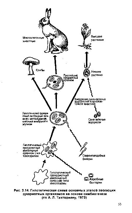 основных этапов эволюции