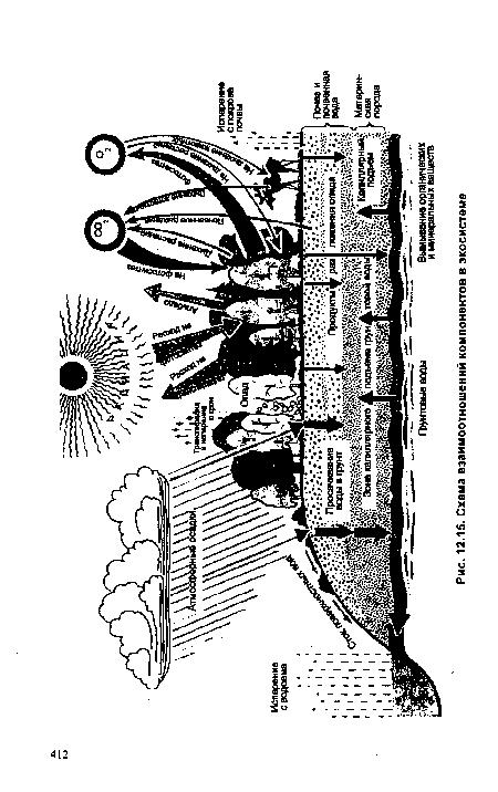 Схема взаимоотношений компонентов в экосистеме.