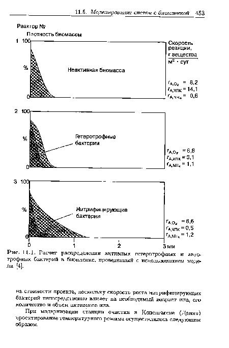Расчет распределения активных гетеротрофных и авто-трофных бактерий в биопленке, проведенный с использованием модели [4].
