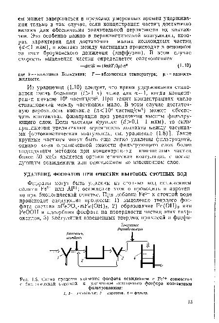 Фосфор и член