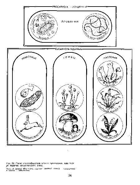 Схема классификации живых организмов, или четыре царства органического мира.