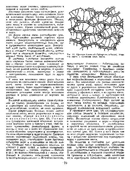 Сфагнум болотный (Sphagnum