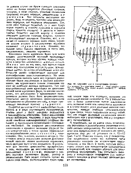 Строение листа папоротника