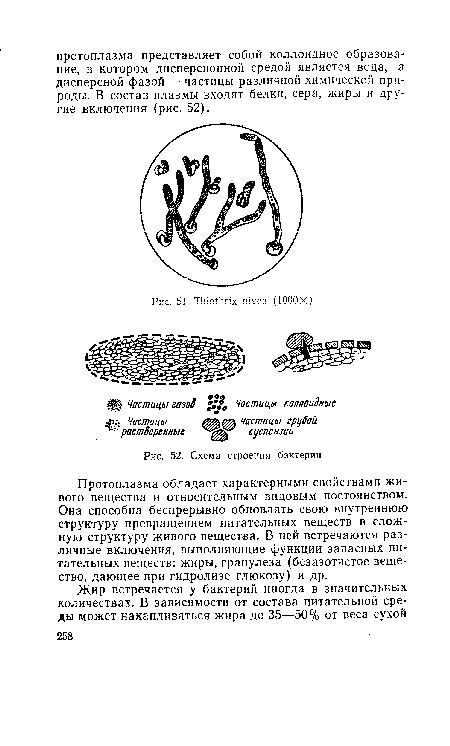 Схема строения бактерии.