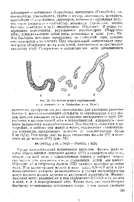 Различные формы серобактерий