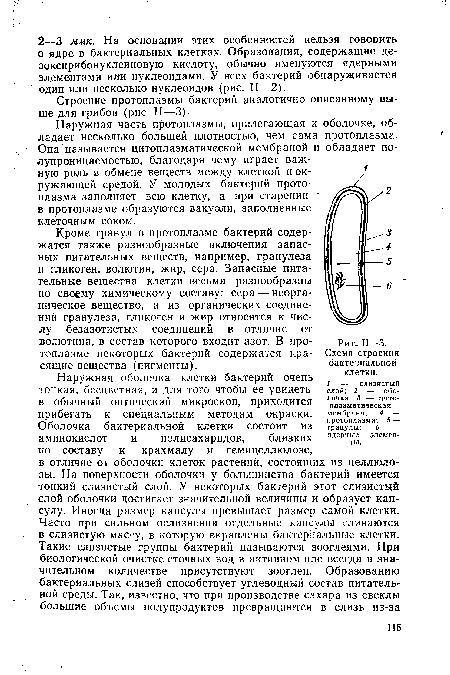 Схема строения бактериальной клетки.