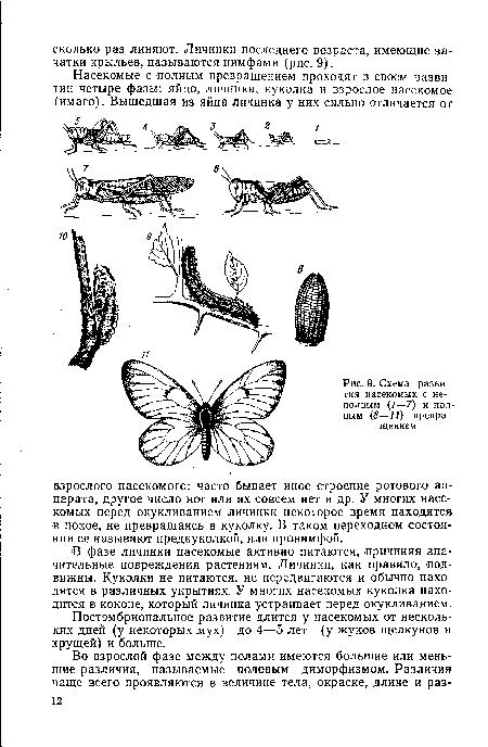 Схема развития насекомых с