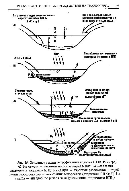 Основные стадии эвтрофикации водоема (Н.Ф. Реймерс)