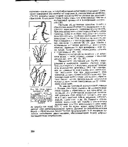 Виды железобактерий (X 5000)