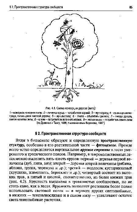 Виды в биоценозе образуют и определенную пространственную стуктуру, особенно в его растительной части - фитоценозе.