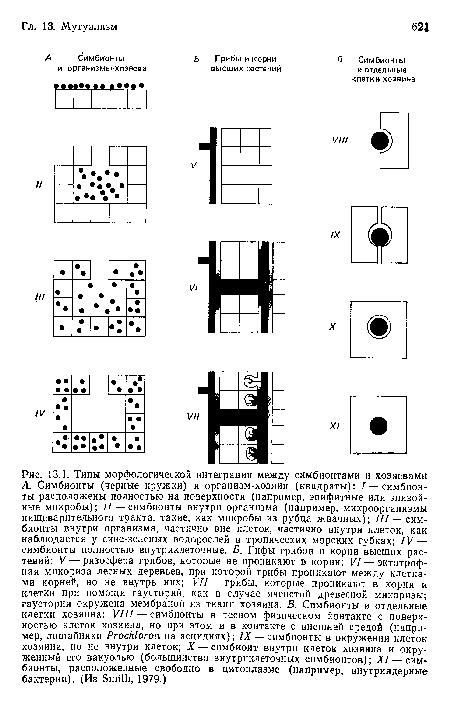 Типы морфологической интеграции между симбионтами и хозяевами А. Симбионты (черные кружки) и организм-хозяин (квадраты)