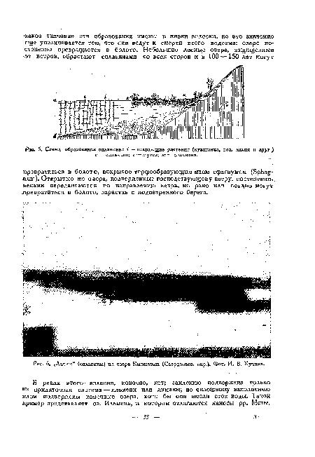 Схема образования сплавины