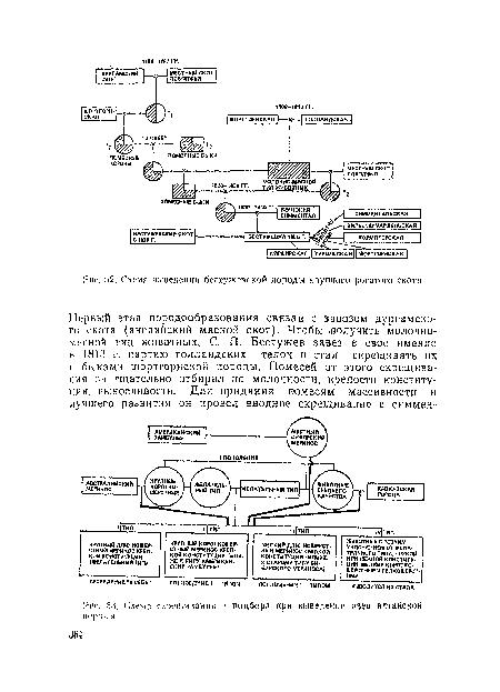 Схема крупного рогатого скота 841