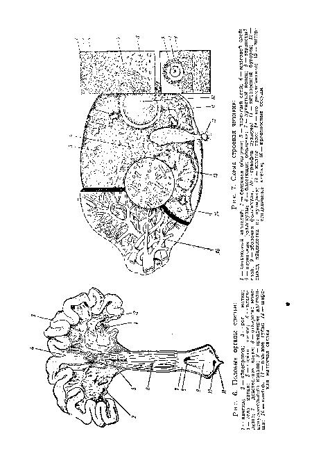 mozhno-li-zhenskie-polovie-organi-polnostyu-zalit-spermoy-nikol-eniston-v-uniforme
