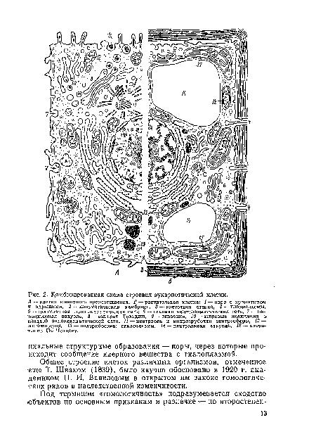 Комбинированная схема строения