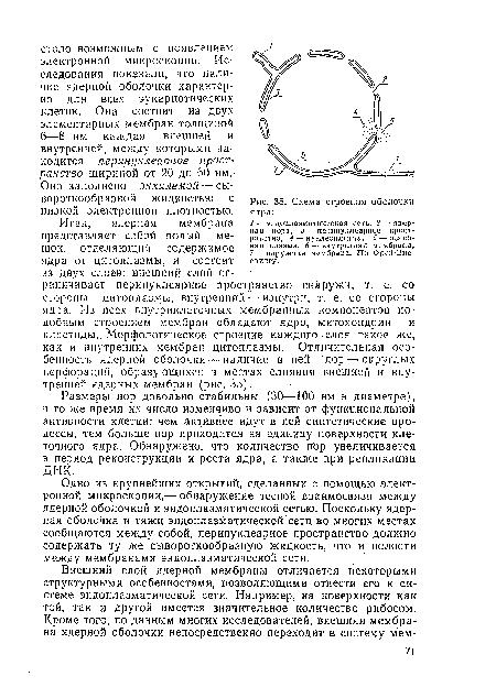 ядра · Схема строения