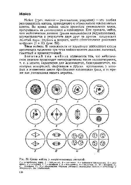 Схема мейоза у покрытосеменных растений.