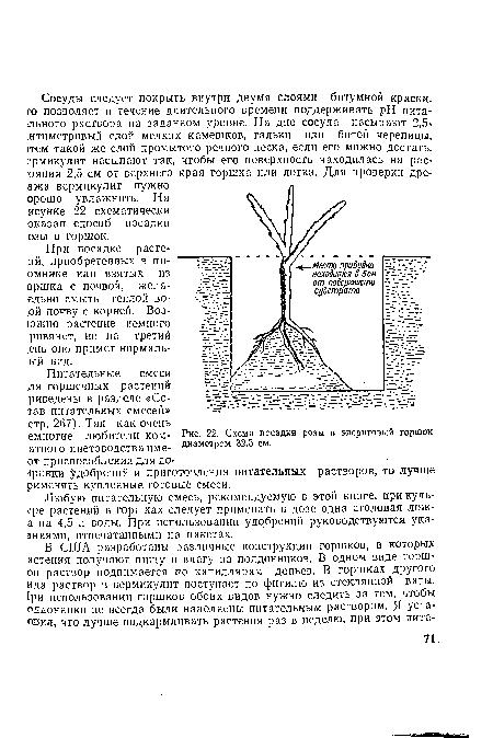 Схема посадки розы в