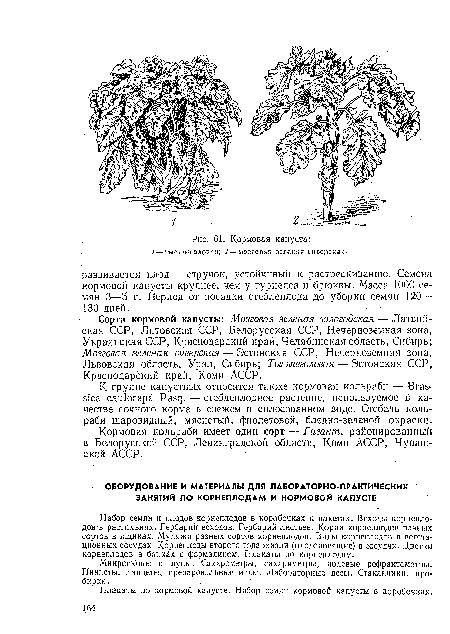 Клубни картофеля  ХитАгроRU