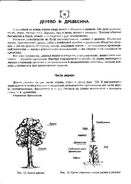 Схема строения ствола дерева в разрезе.